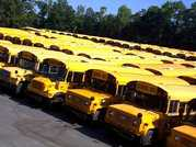 Buses and Buses