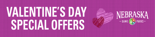 Valentine's Day special offers