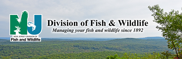 F&W Spring/Summer Ridge Banner