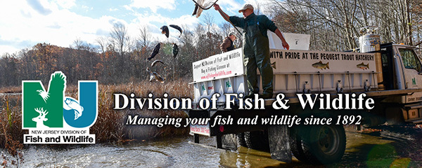 F&W Fall Trout Banner