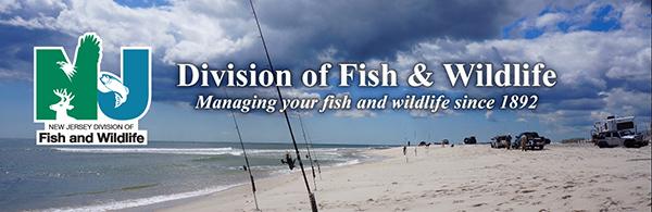 Beach Fishing Banner