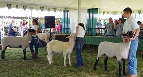4-H Fair-animal show