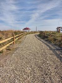 Bradley Beach Maritime Forest-Alek Modjeski