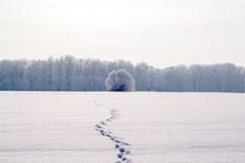 January 2021 Scavenger Hunt Frelinghuysen Arboretum