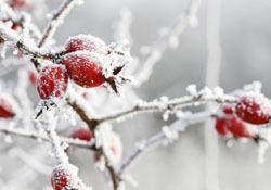 winter plants at kay
