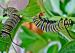 caterpillar kids