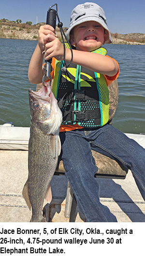 Butte walleye