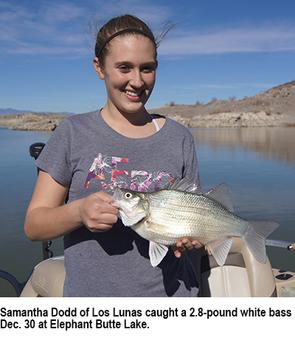 Elephant Butte white bass