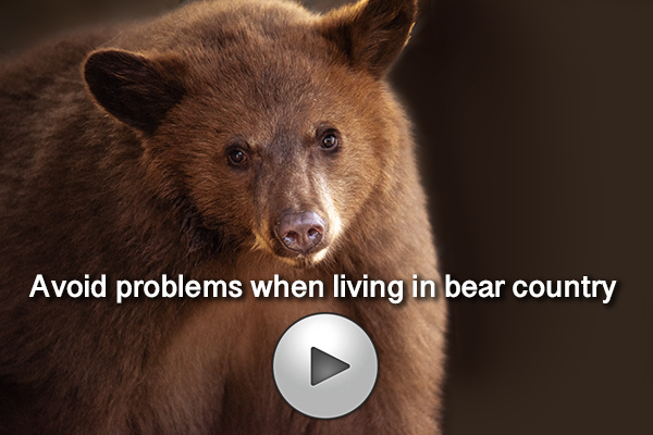 bear aware video