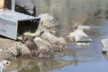 Otter Release