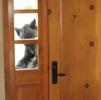 Bear at front door