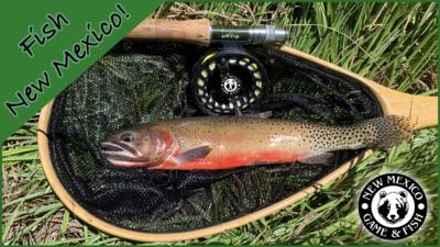 Fish NM Banner