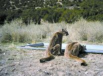 Wildlife and Heat