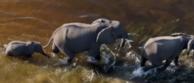 GWC Elephants