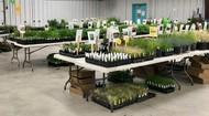SFEMG plant sale