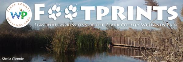 Footprints, Seasonal Impressions of the Clark County Wetlands Park