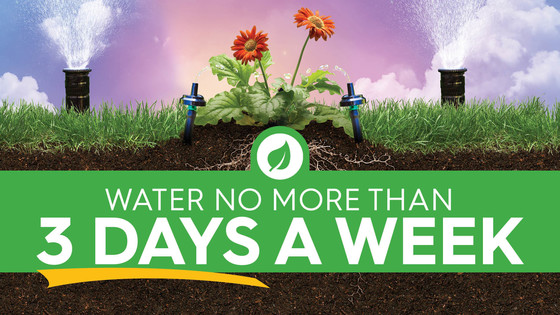 Spring Watering Schedule