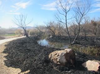 Nature Preserve fire