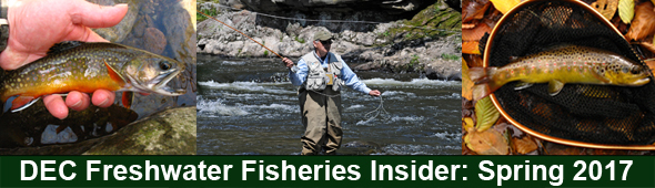DEC Freshwater Fisheries Insider banner