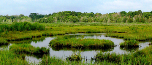 Wetlands at Wertheim Wildlife Refuge