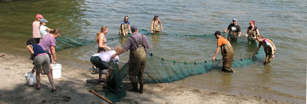 seining at Croton Point - see fish count calendar listing
