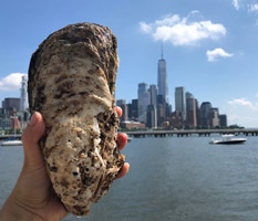 Giant oyster at Pier 40, Manhattan