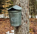 Maple sugaring in the ADKs