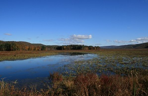 View of wetlands at Bashakill WMA