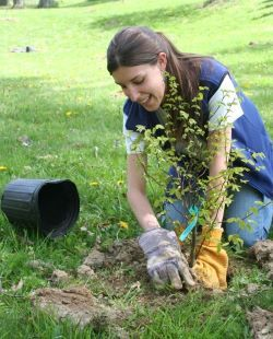 A young woman wearing garden gloves plants a tree.