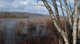 This winter image depicts a birch tree in the foreground of a large wetland pond with hills in the background.