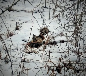 Woodcock nest on the snowy ground