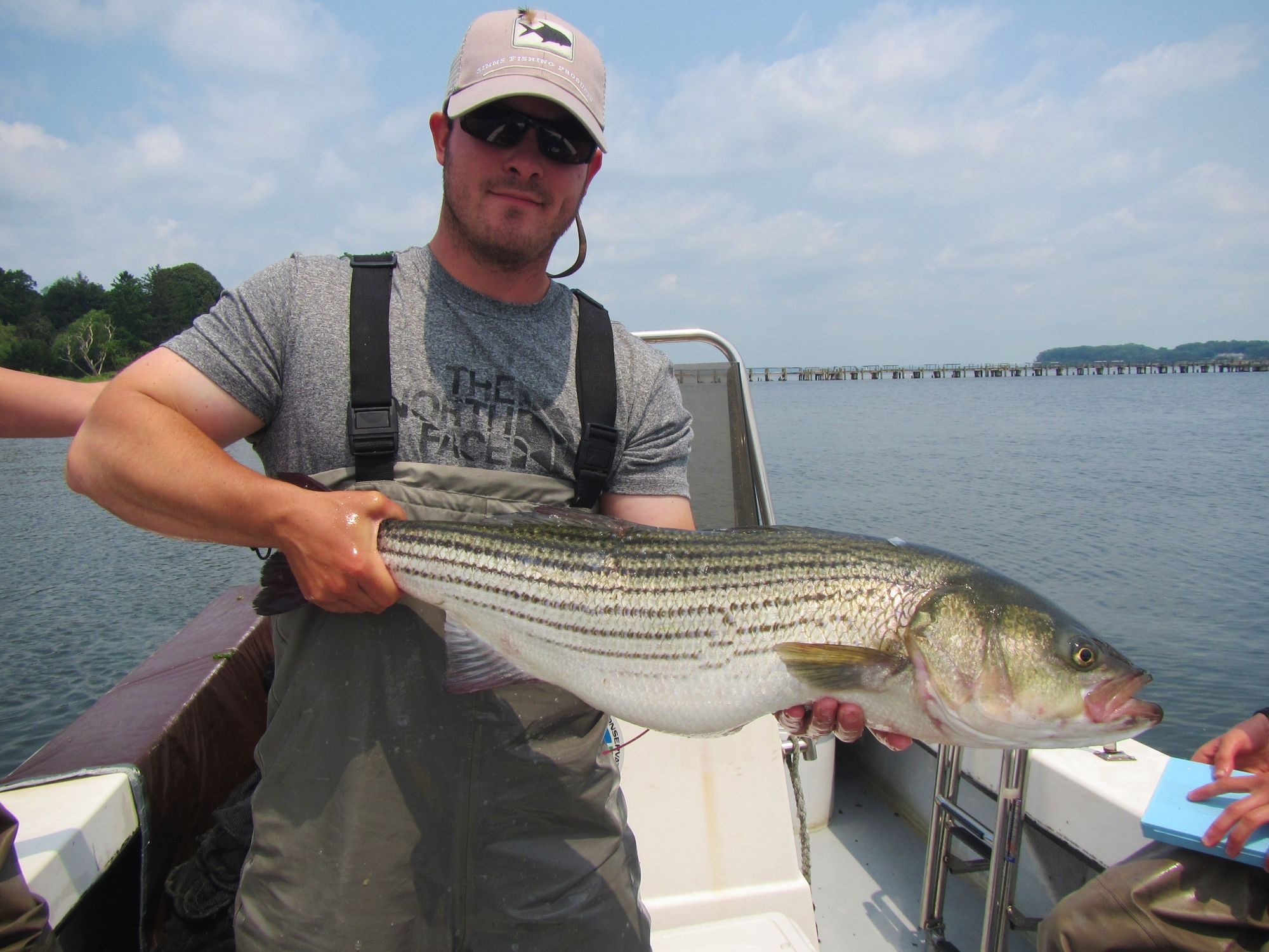 Man holding striped bass on boat