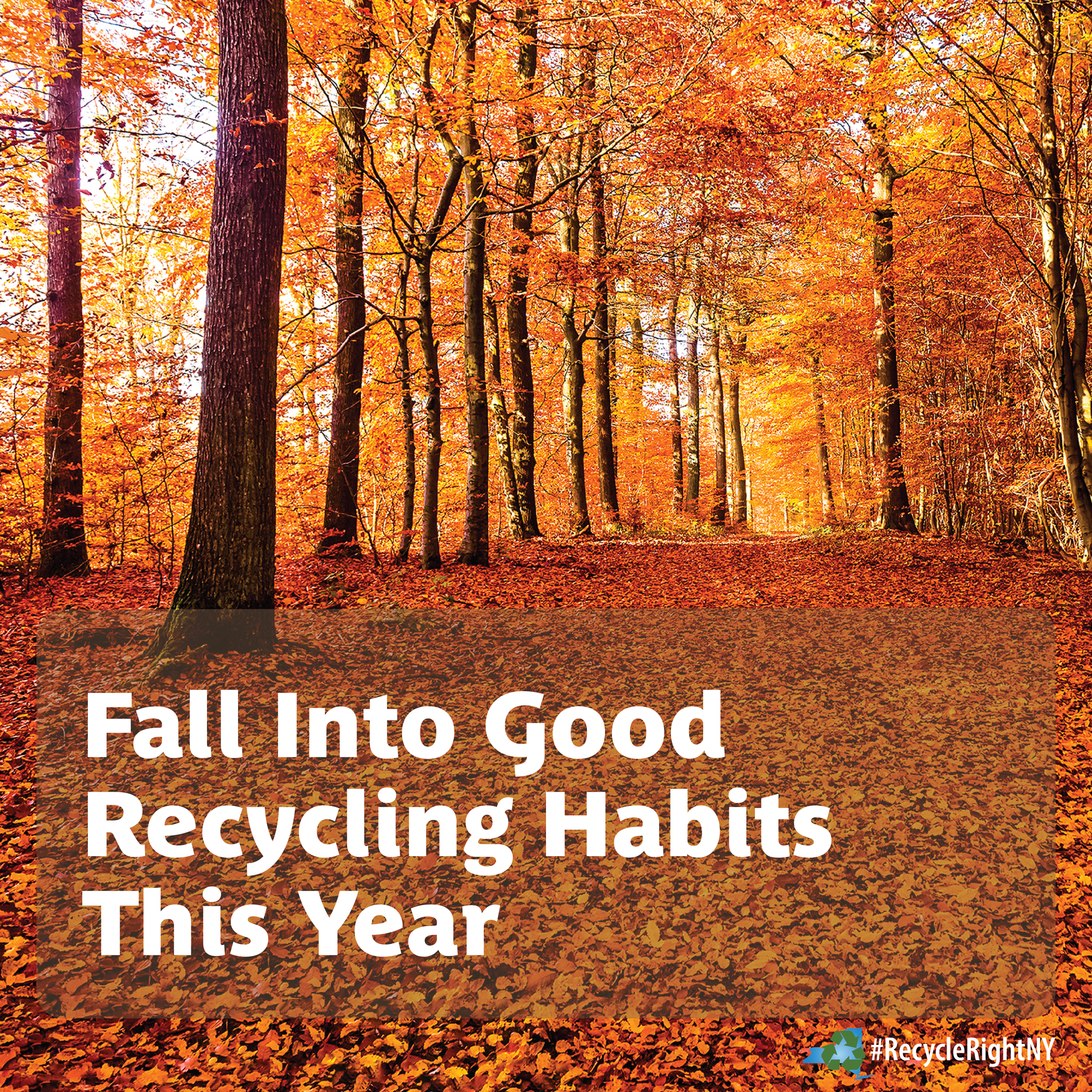 Fall into the Right Recycling Habits