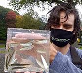 Blueback herring