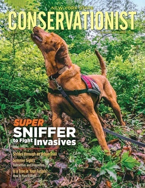 Picture of dog on the cover of a Conservationist magazine