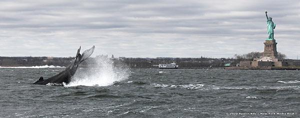 Humpback whale courtesy of Bjoern Kils/New York Media Boat. Used by Permission.