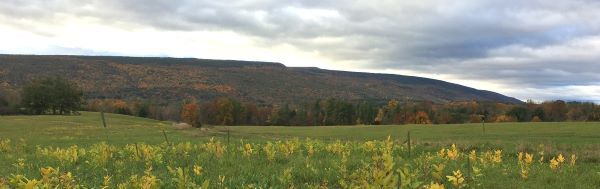 An image of the Shawangunk Ridge in fall on a cloudy day with field of wildflowers in the foreground. Photo: Laura Heady