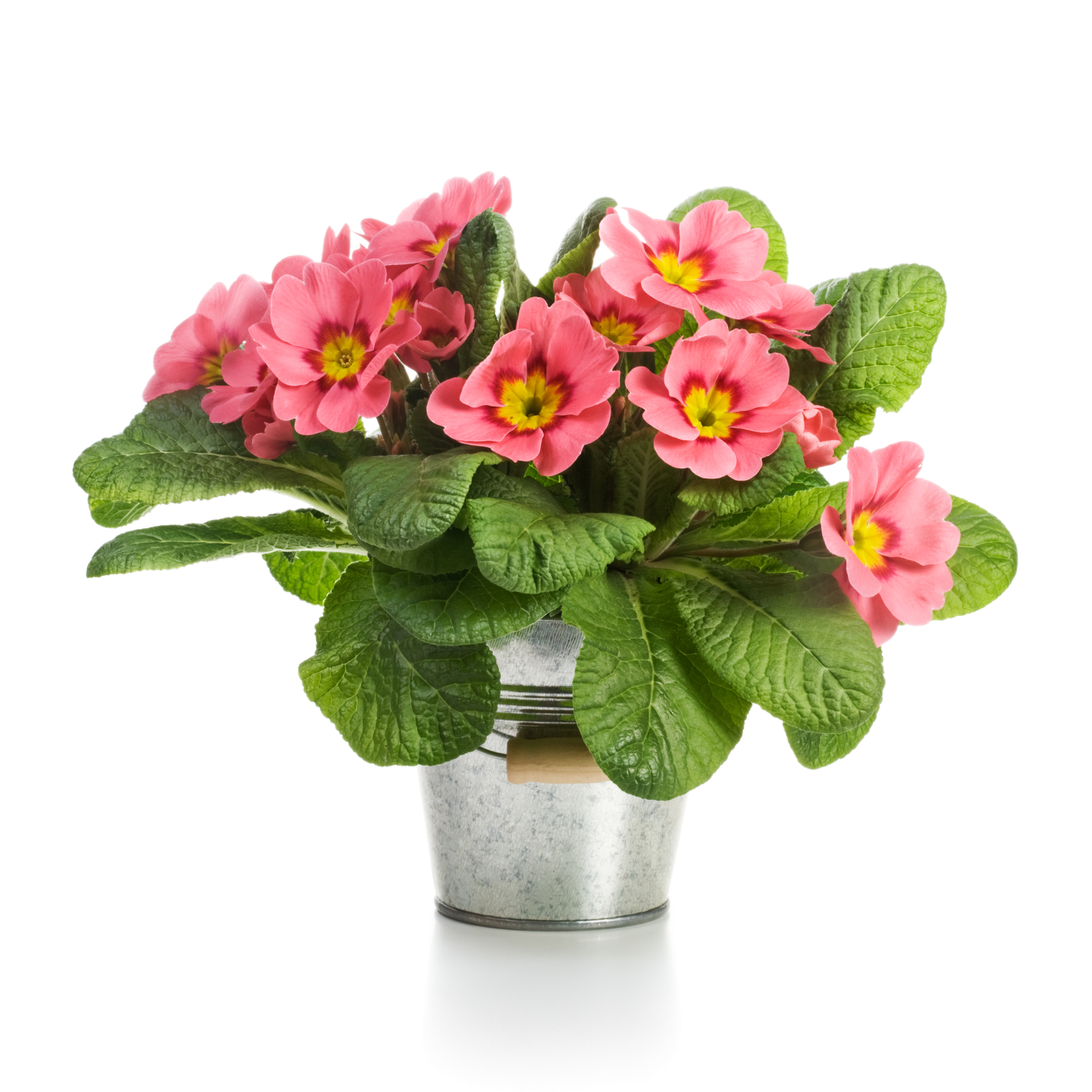 Valentines Day Potted Flowers
