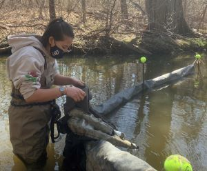 A young woman wearing a mask stands in waders in a stream looking into a large cone-shaped net.