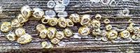 Bay barnacles