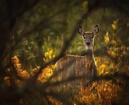 deer behind foliage