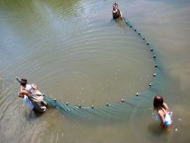 A bird's eye view of 3 students in waders stretching out a seine net