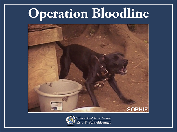 Bloodline 3