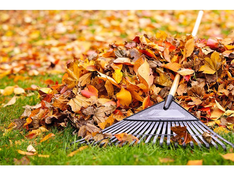 Leaf pick up Oct 1 - Dec 1