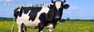 Bovine Health