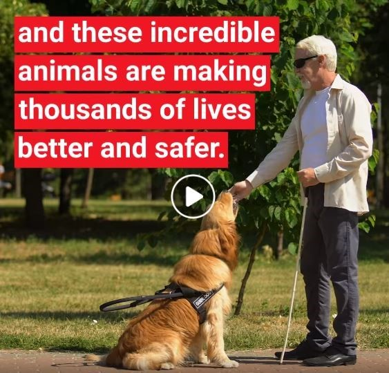 Photo of blind man with his service dog and the text: and these incredible animals are making thousands of lives better and safer