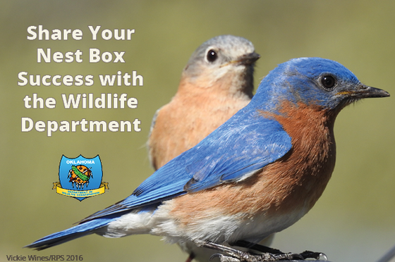 Share your nest box success png2