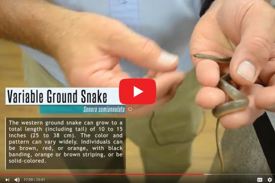 Outdoor Oklahoma Nonvenomous Snakes Show