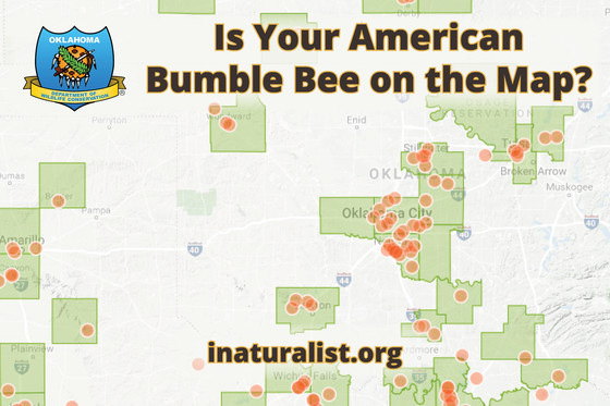 American Bumble Bee Promo June Wild Side