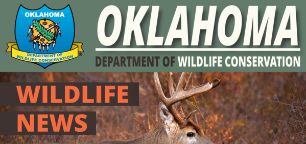 Wildlife News banner